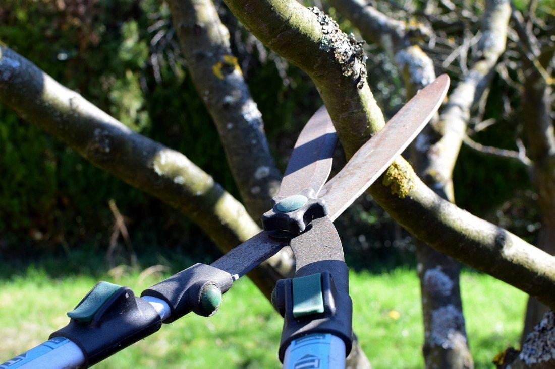 pruning-shears-4964455_1920